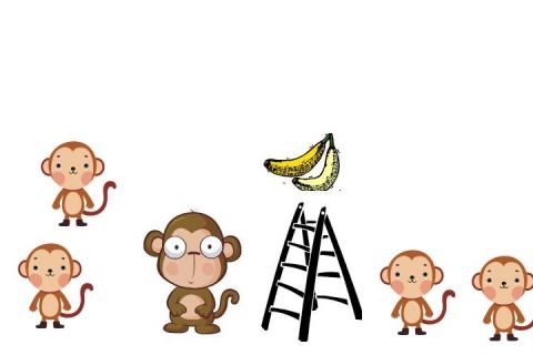 5-scimmie